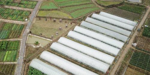 蔬菜产业助农 家门口增收