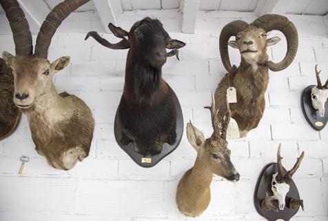"""西班牙动物标本展带观众探索""""丛林世界"""""""