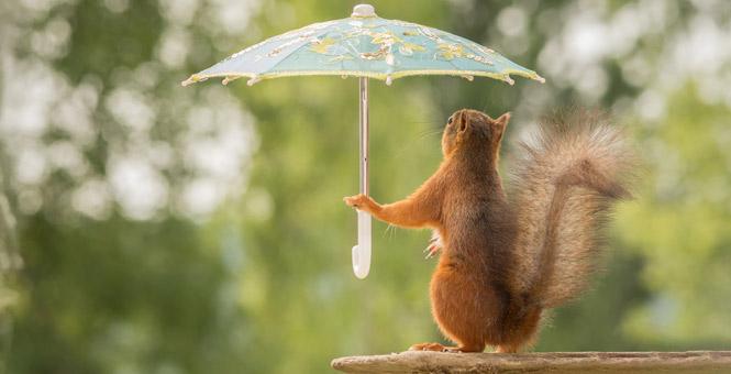 """超长梅雨季围观动物从容应对""""梅雨天"""""""