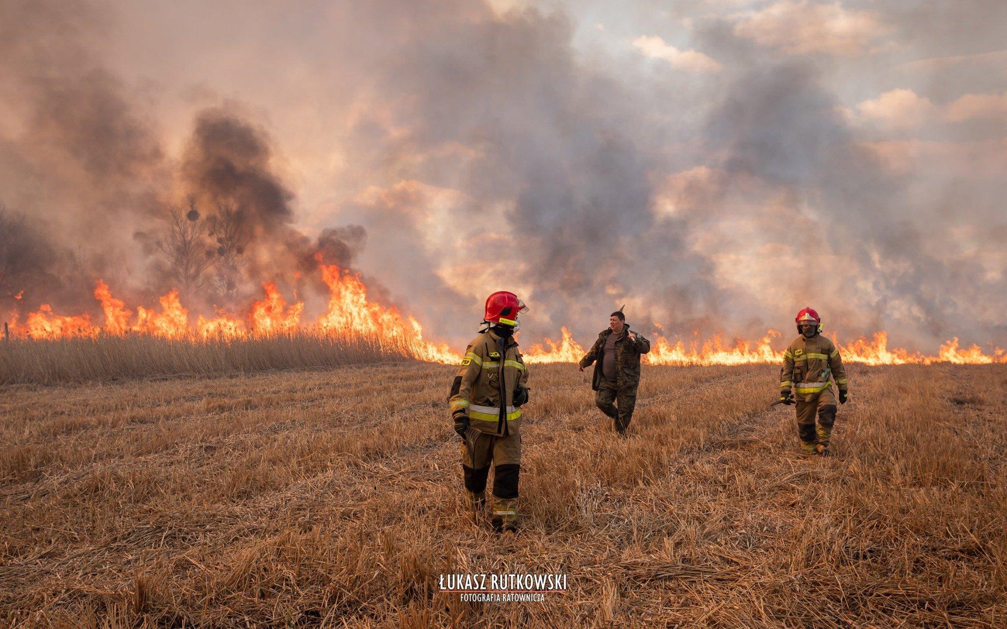 波兰别布扎国家公园火灾持续 过火面积达6000公顷