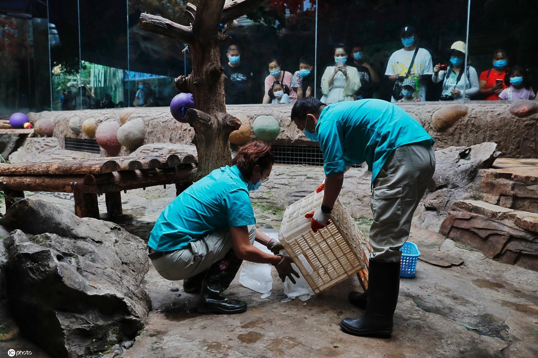 北京动物园饲养员高温天主动加班给动物防暑