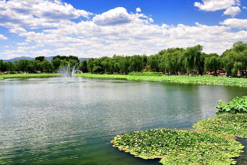 美丽乡村池塘装点
