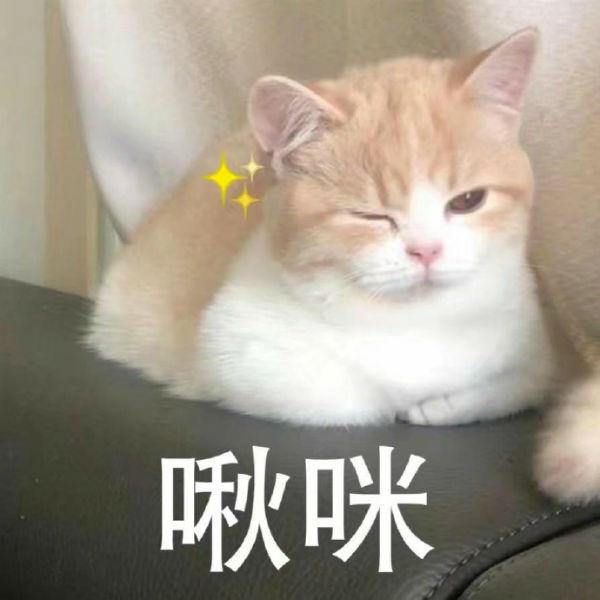赵丽颖冯绍峰散个步都在撒糖,明星cp哪家甜