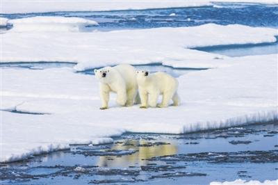 别担心,北极出现臭氧空洞只是因为太冷了