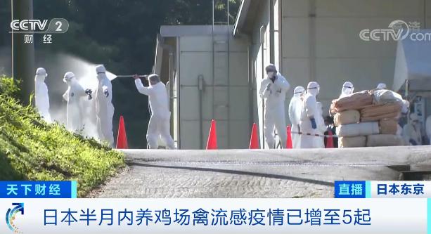 半个月,日本现多起禽流感疫情!近50万只鸡被扑杀!疫情源头或来自于... 第1张