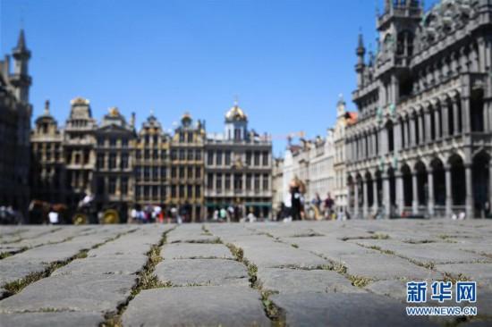 比利时布鲁塞尔大广场:游客减少 砖缝长草