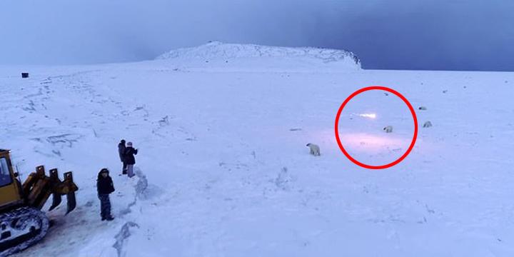 太恐怖!小村落慘遭「60隻飢餓北極熊包圍」村民拿出這項「武器」慘遭網砲轟:殘忍!