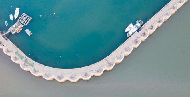 山东青岛渔港现少种颜色 绿色灰色泾渭分明