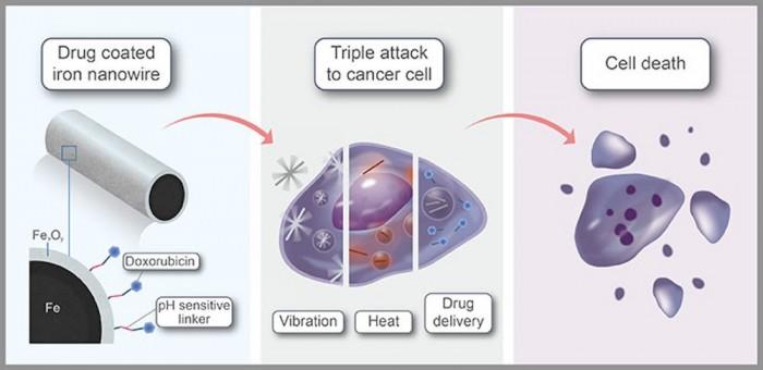 一项新研究发现:铁纳米线被发现可对癌细胞发起三重威胁