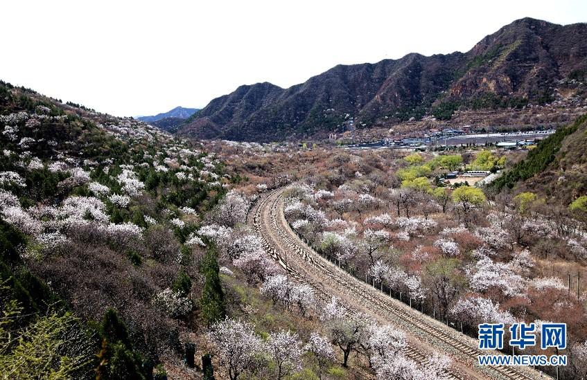 开往春天的列车穿越居庸一路花海