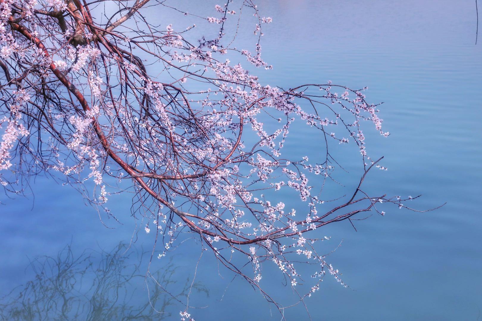 云游中国|颐和园:春色满园关不住