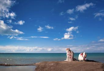青海湖:高原上的一抹海天亮蓝