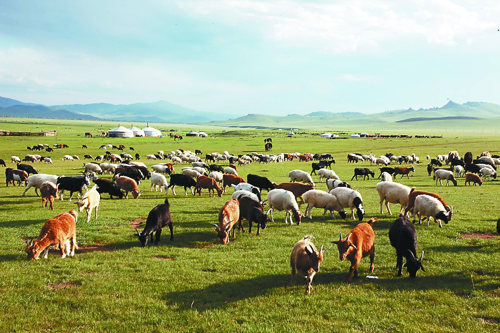 """羊和马,蒙古国的""""硬通货"""""""