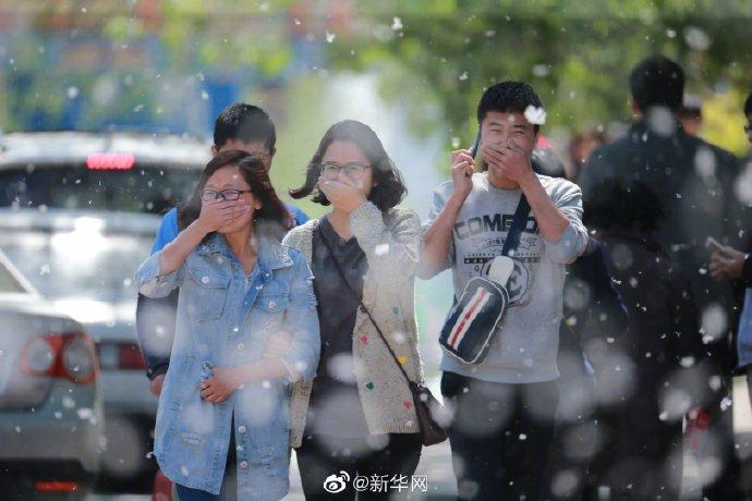 北京今年杨柳飞絮将有三个高发期,时长约50天