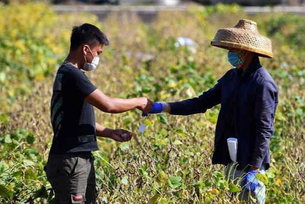 海南三亚:多措并举保障南繁科研工作