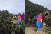 12岁男孩捡松果时被棕熊跟踪 冷静逃离险境