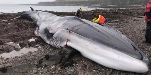 令人心碎的画面!英海滩上18米长鲸鱼搁浅死亡的悲惨时刻