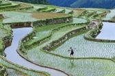 贵州从江:播下种螺助增收